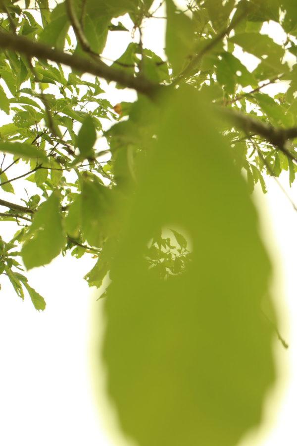 穴のあいた葉っぱ