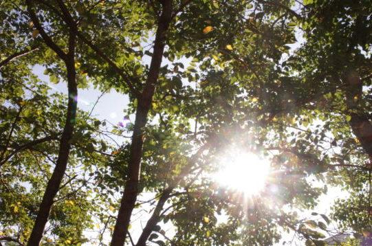 木々の隙間から木漏れ日
